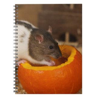 Carnet rat à capuchon noir effrayant mangeant des graines