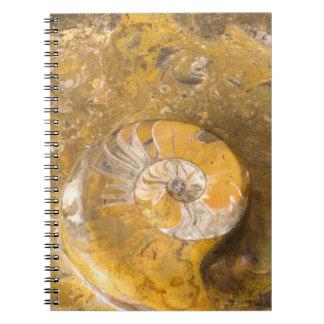 Carnet Roche contenant beaucoup de fossiles et photo