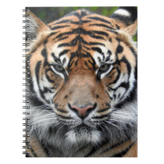 Carnet Tigre de Sumatran