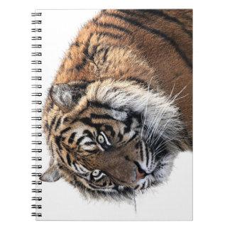 Carnet Tigre majestueux orange frais avec le regard fixe