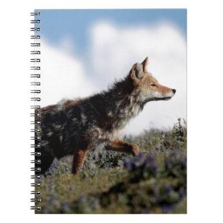 Carnet Un coyote marche en parc national de Yellowstone,