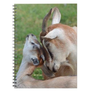 Carnet Une mère tendre de moment et chèvres de bébé