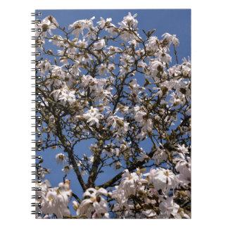 Carnet White flowers of star magnolia