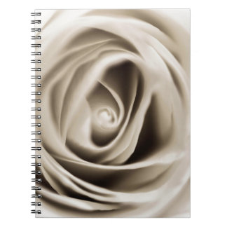 Carnet white rose