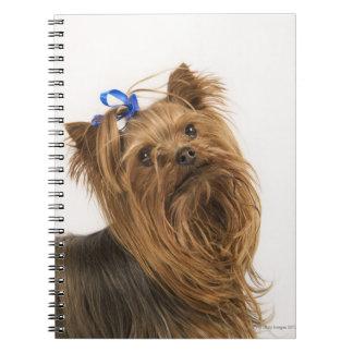 Carnet Yorkshire Terrier/Yorkie. Race animée de