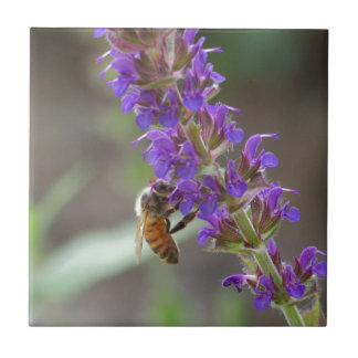 Carreau Abeille sur Salvia