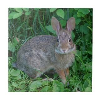 Carreau Animal sauvage de lapin de Brown