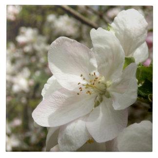 Carreau Apple fleurissent tuile en céramique de photo