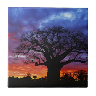 Carreau Arbre africain de baobab, digitata 2 d'Adansonia