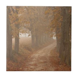 Carreau Arbres d'automne