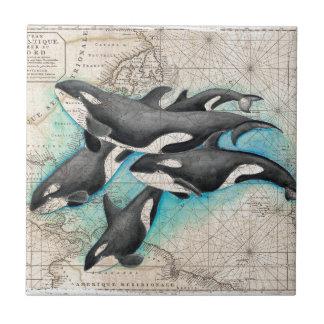 Carreau Atlas de carte d'orque