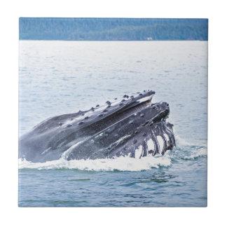 Carreau baleine de bosse