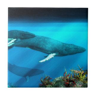 Carreau Baleines de bosse