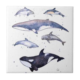Carreau Baleines et dauphins de l'Ecosse