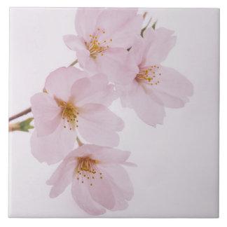 Carreau Belles fleurs de cerisier de ressort à Tokyo