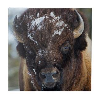 Carreau Bison Taureau, hiver 1