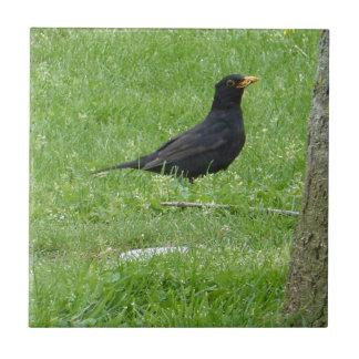 Carreau Black Bird