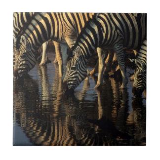 Carreau Boire de troupeau de zèbres de plaines (Quagga