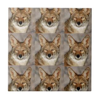 Carreau boîtes de coyotes