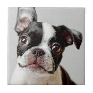 Carreau Boston Terrier