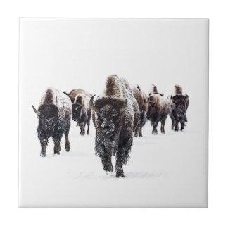 Carreau Buffalo