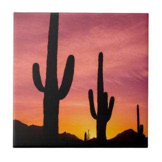 Carreau Cactus de Saguaro au lever de soleil, Arizona