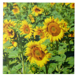 Carreau Champ des tournesols