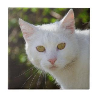 Carreau Chat blanc avec les yeux jaunes