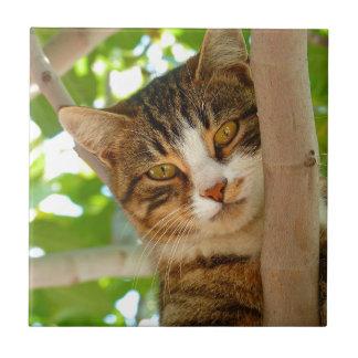 Carreau Chat grimpant à un arbre