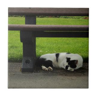 Carreau Chat noir et blanc sous le banc