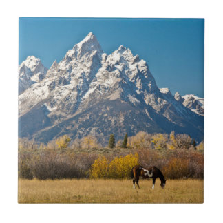 Carreau Cheval et Tetons grand, ranch principal d'orignaux