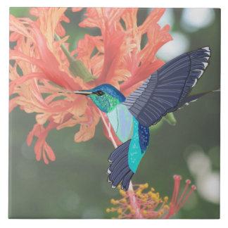 Carreau Colibri de turquoise et ketmie orange