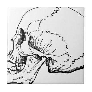 Carreau Côté de crâne