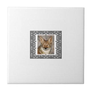 Carreau coyote dans un cadre