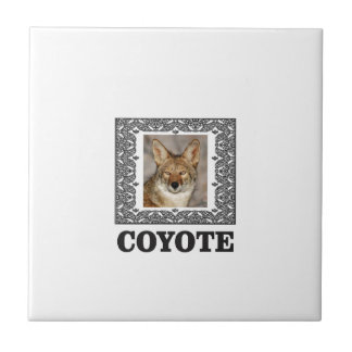 Carreau coyote dans une boîte