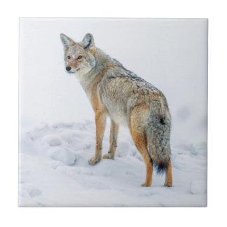 Carreau Coyote sur l'alerte dans la neige