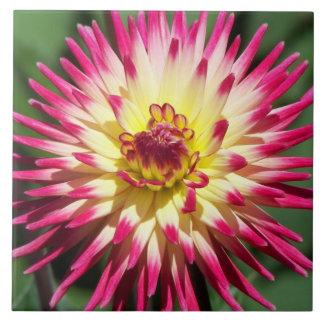 Carreau Dahlia coloré floral