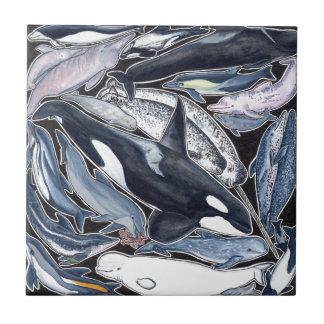Carreau Dauphins, orques, belugas et narvales