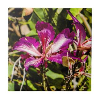 """Carreau de céramique 4,25"""" d'orchidée de Hong Kong"""