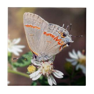 Carreau de céramique bleu sombre de papillon de
