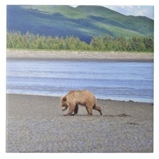 Carreau de céramique de petit animal d'ours gris