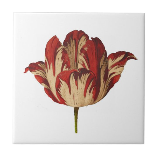 Carreau de c ramique de tulipe botanique vintage d zazzle - Carreau de ceramique ...