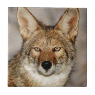 Carreau de coyote fin