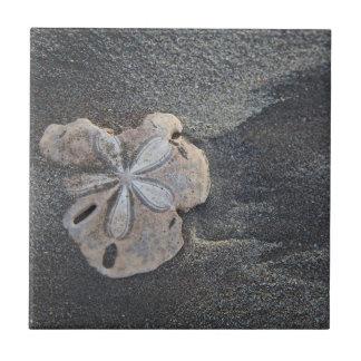 Carreau Dollar de sable sur le sable