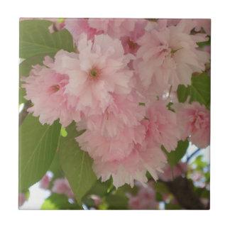 Carreau Double ressort rose se développant du cerisier II
