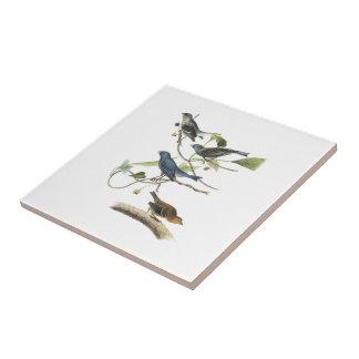 Carreau Étamine d'indigo par Audubon