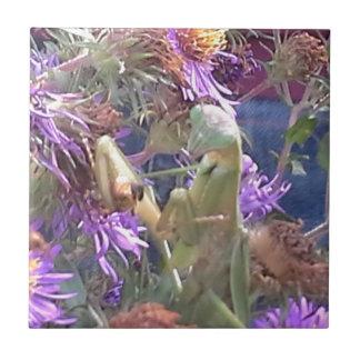 Carreau Exploration de scarabées de Milkweed en masse