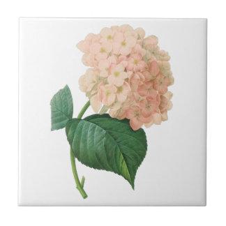 Carreau Fleur rose vintage de Hortensia d'hortensia par