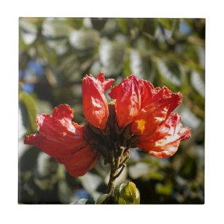 Carreau Fleurs d'un tuliptree africain