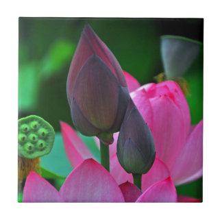 Carreau Fleurs roses de Lotus